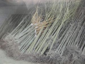 arbres hangar