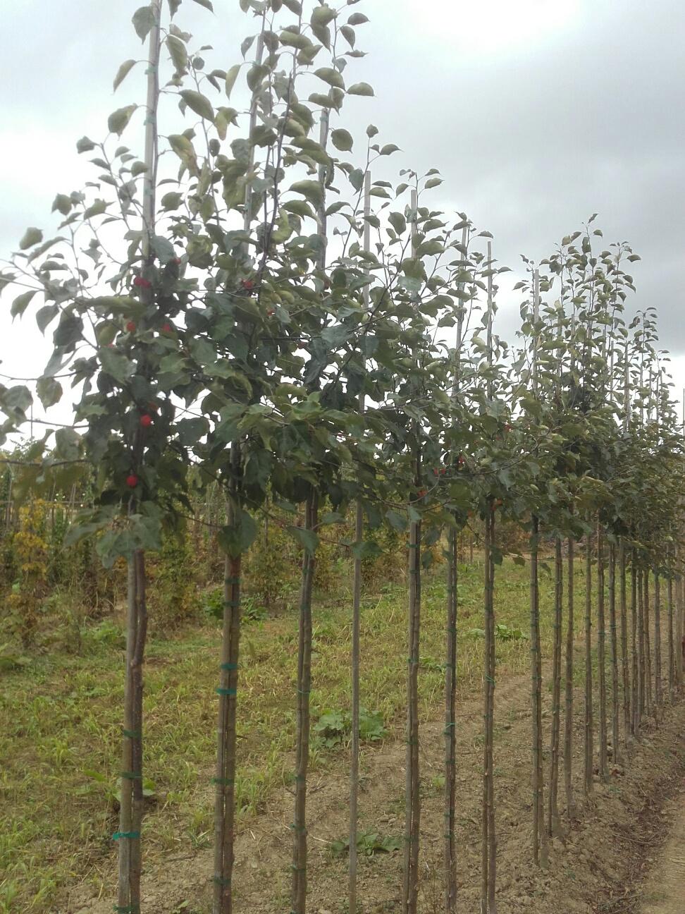 Des subsides wallons pour planter vos arbres !